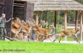 ZOO Dvůr Králové o víkendu otevře Africké safari