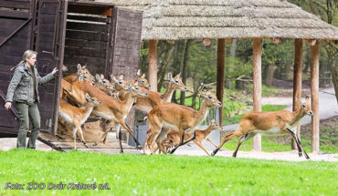 safari-ve-dvore-se-otevira