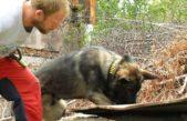 Termovize je prima, psí čumák je však jistota